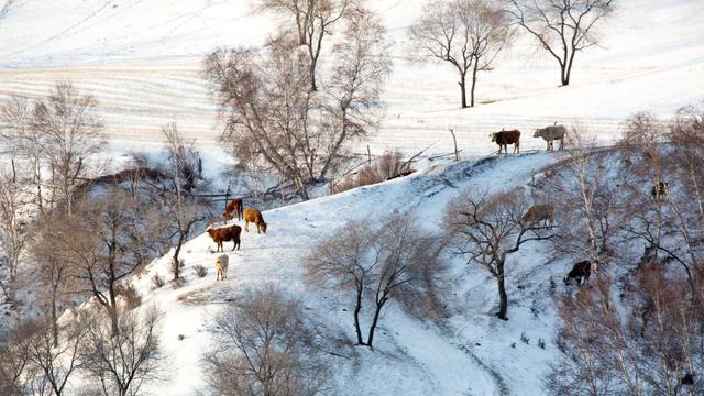 蘇軾詩詞里的冬天。有喜悅、有悲涼。寫盡人生百味 - 每日頭條