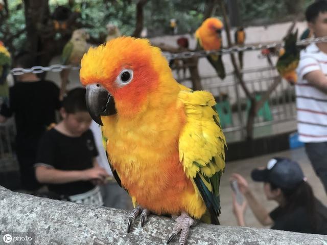 寵物鸚鵡平時應該餵什麼飼料?我們怎麼選擇合適的飼料餵食鸚鵡 - 每日頭條
