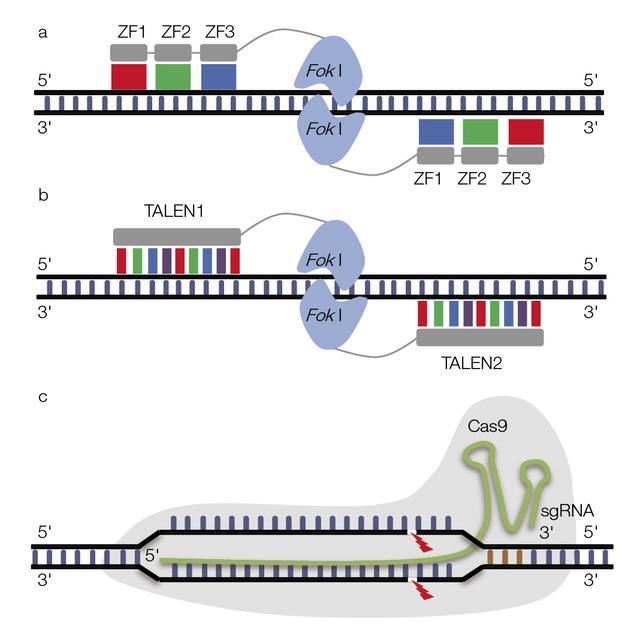 基因編輯技術:進展與挑戰 - 每日頭條