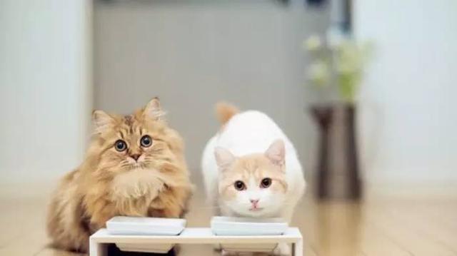 別讓你的無知害死了一個愛你的貓主子(新手養貓攻略) - 每日頭條