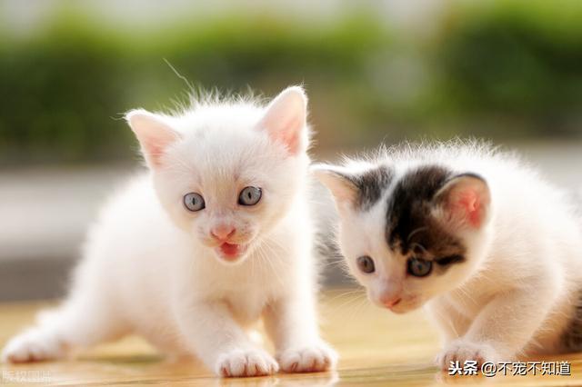 世界上最長壽的貓活了38歲,你家貓咪幾歲了呢? - 每日頭條