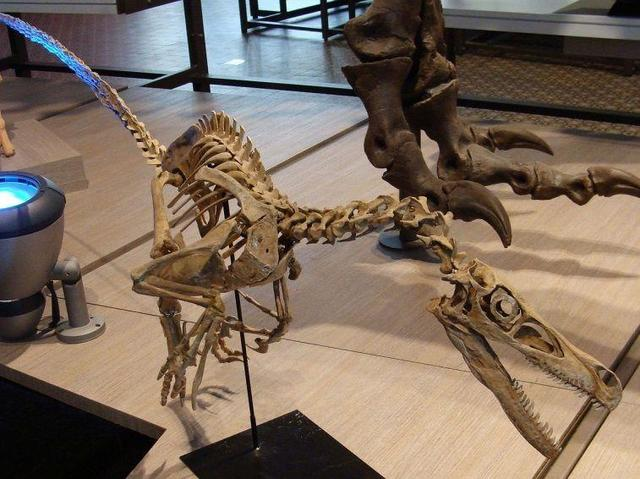 它是保護眼睛的鎧甲 恐龍的眼睛也要靠它保護! - 每日頭條