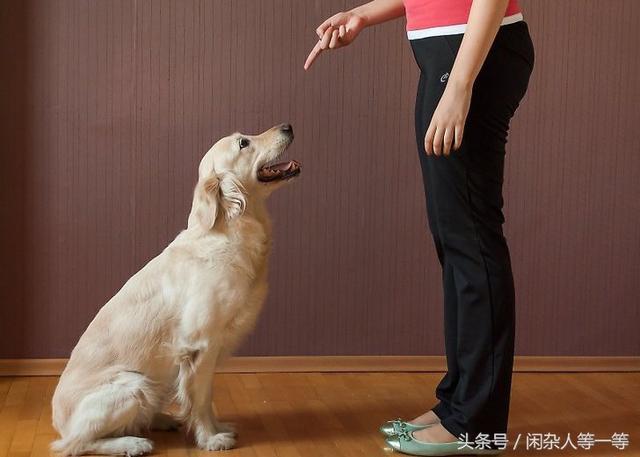 新手養狗的朋友。學會這一種方法。輕鬆讓你的狗狗學會坐 - 每日頭條