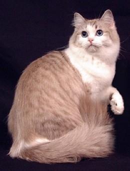 原來貓的種類這麼多?九種超可愛貓咪你愛哪款 - 每日頭條