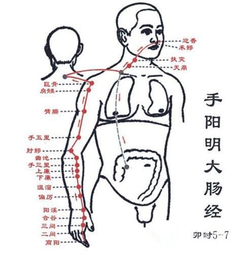 大腸經循行及穴位 - 每日頭條
