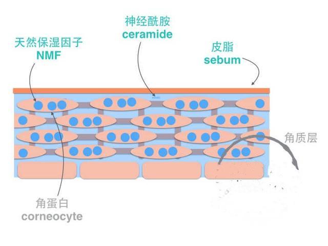 油性皮膚如何做保濕工作? - 每日頭條