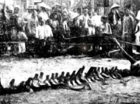 中國一百年前一條真龍現身日本。被製成標本。專家稱龍不再是傳說 - 每日頭條