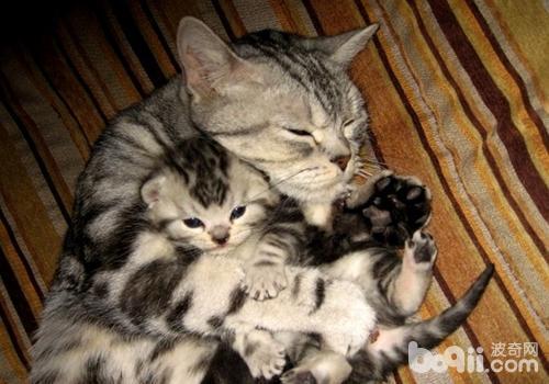 貓嗜酸性肉芽腫有哪些癥狀 - 每日頭條