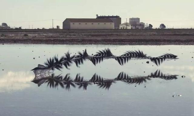 藝術| 西班牙攝影師拍下了遷徙的「機械鳥」 - 每日頭條