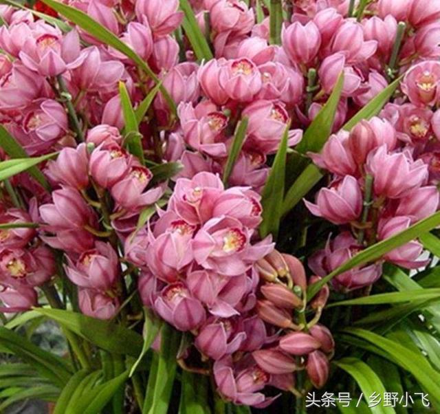 養蘭人都喜歡養這幾種蘭花。不知你喜歡哪種 ! - 每日頭條