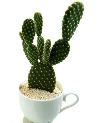 用點綠色植物,減少身邊輻射 - 每日頭條