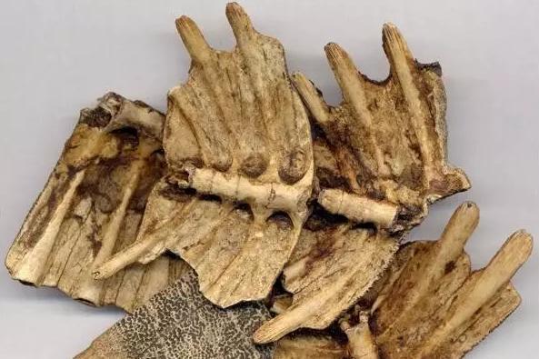 藥材解說:你所不了解的鱉甲,也是一味珍貴藥材 - 每日頭條