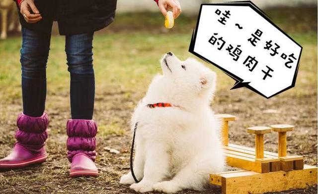 不可對狗狗做的6件事,你做過幾件? - 每日頭條