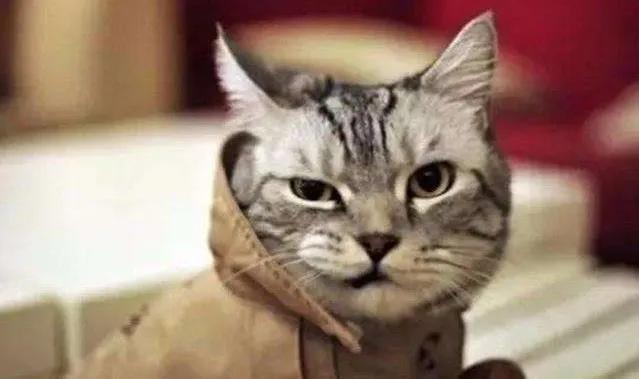 喵星人總在主人吃飯的時候拉屎?鏟屎官以後少在貓咪面前做這事 - 每日頭條