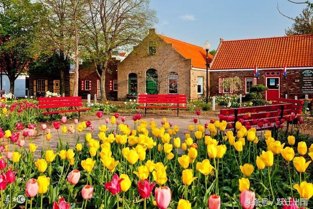 9萬美金移民荷蘭是真是假? - 每日頭條