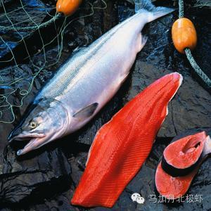 你認識真正的三文魚嗎? - 每日頭條