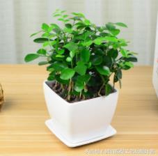 為什麼一到夏天要放這幾種盆栽?很多人還傻傻不清楚。作用大得很 - 每日頭條
