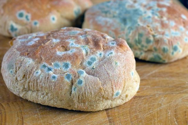 一個發霉的麵包所能告訴你的常識! - 每日頭條