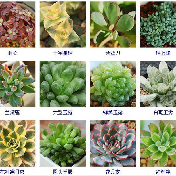 多肉植物都是叫什麼?收藏起來這些多肉名稱就夠了 - 每日頭條