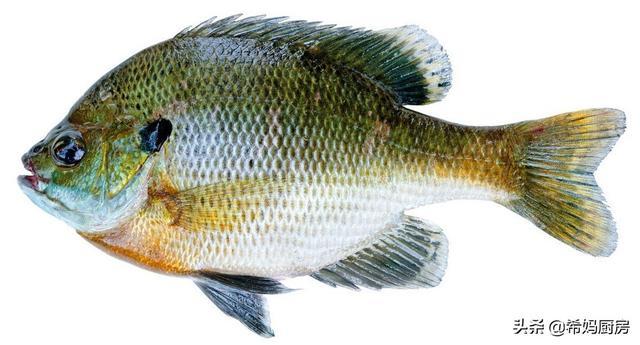 我家常吃這幾種魚。魚刺少、肉質細嫩還沒有腥味。有孩子的必收藏 - 每日頭條