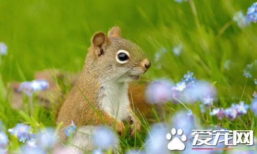 松鼠有哪些生活習性 松鼠有貯藏食物的習慣 - 每日頭條