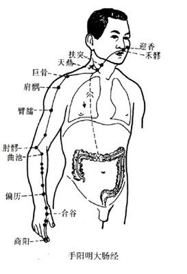 十二經絡基礎知識之----手陽明大腸經第一 - 每日頭條