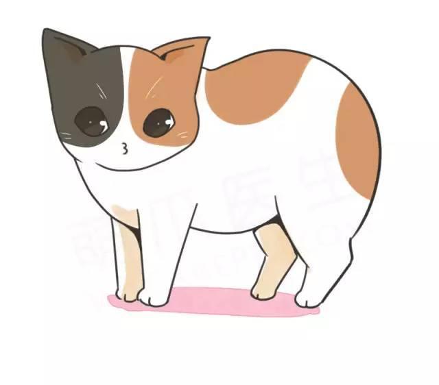為啥這個貓沒尾巴?! - 每日頭條