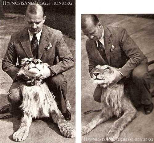 動物為什麼會裝死?是否存在動物催眠大師? - 每日頭條