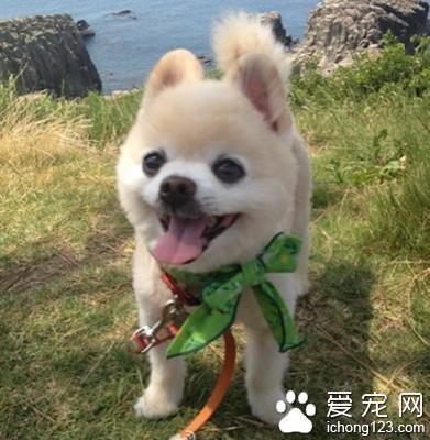 怎麼訓練狗狗走路 採用獎勵法訓練 - 每日頭條