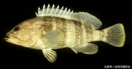 南海常見海水魚類品種介紹 - 每日頭條