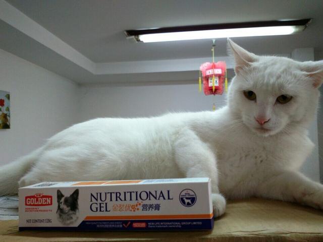 怎麼避免被傳染貓癬 - 每日頭條