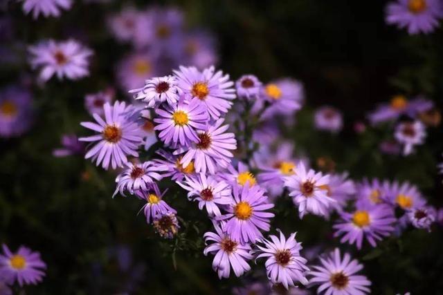 10種比較耐看的多年生植物。花園常備花兒 - 每日頭條
