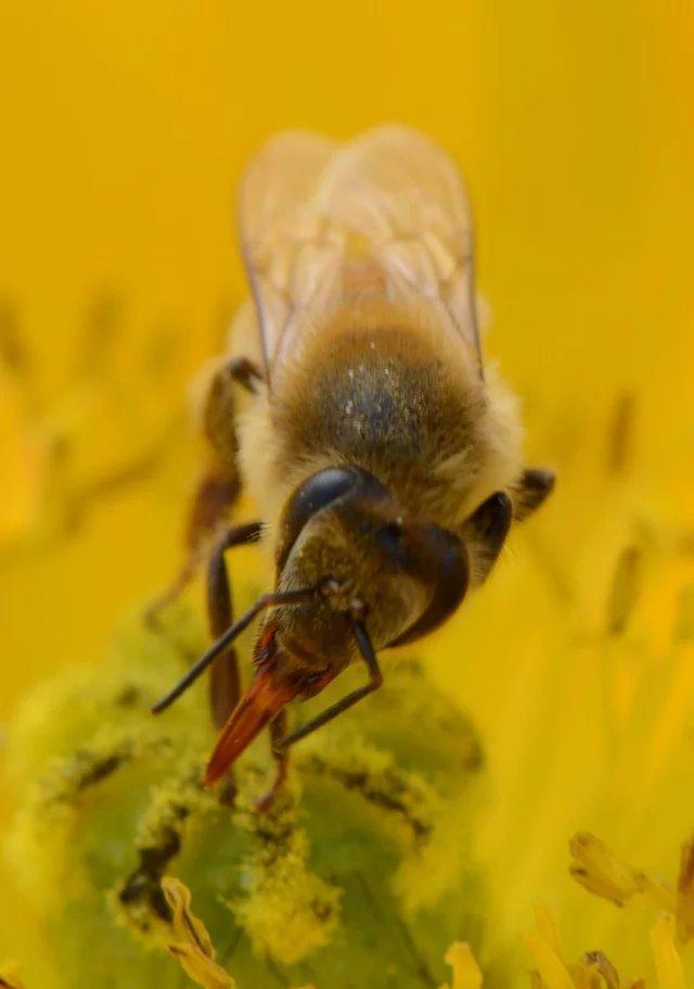 你能分清楚蒼蠅和蜜蜂嗎——微距攝影 - 每日頭條