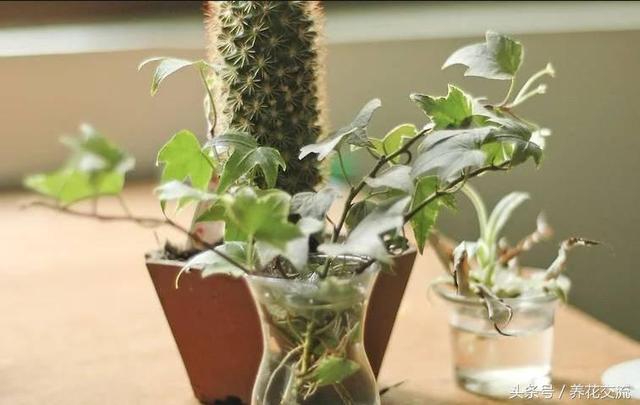 在辦公室選這些植物最好,能夠凈化空氣和增加生機的綠植 - 每日頭條