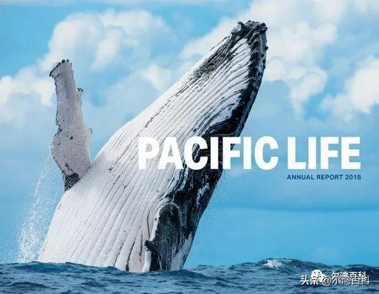 【美國保險】Pacific Life太平洋人壽指數型萬能壽險 - 每日頭條