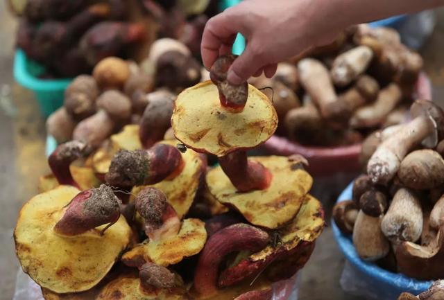 松茸、竹蓀、牛肝菌、雞樅菌、松露……中國哪種野生菌最好吃? - 每日頭條