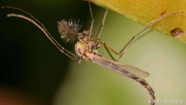 科普:夏天在操場乘涼,為什麼總有一群討厭的蚊子在頭上飛? - 每日頭條