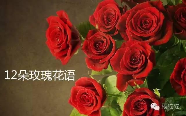 12朵玫瑰花語的含義 - 每日頭條