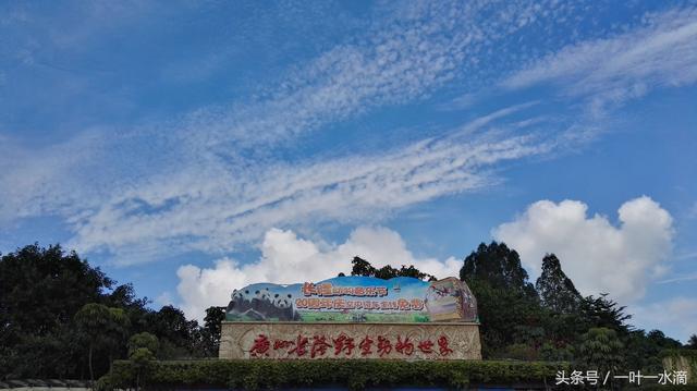 休假第四天——廣州長隆野生動物園 - 每日頭條