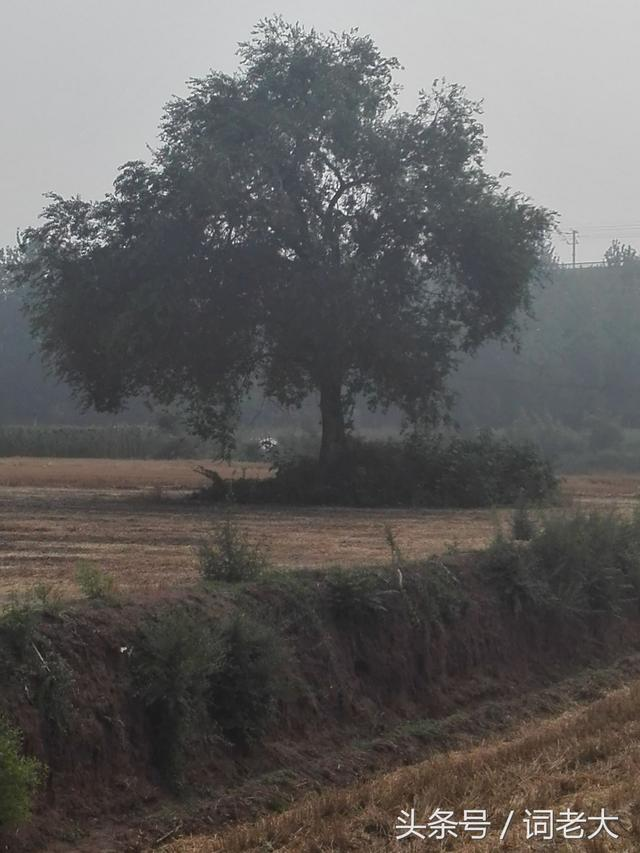 為什麼村裡的墳頭上都有顆柳樹? - 每日頭條