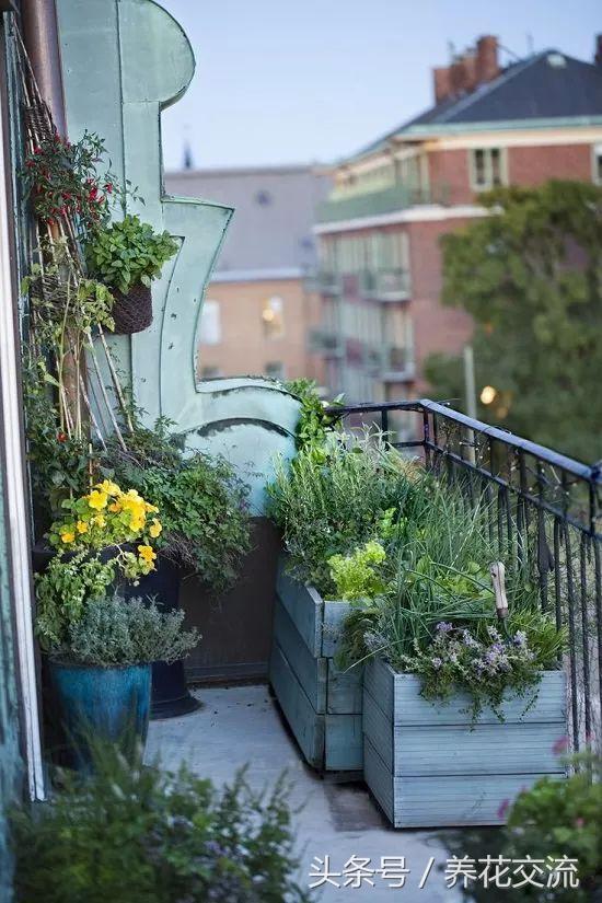 這5種創意的陽臺你更喜歡哪種。是花園還是植物森林更好? - 每日頭條