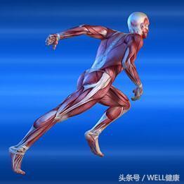 跑步拉傷大腿膕繩肌。怎麼康復好得快? - 每日頭條