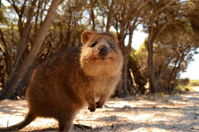 這8種動物很少有人見到。能說出名字的人更少! - 每日頭條