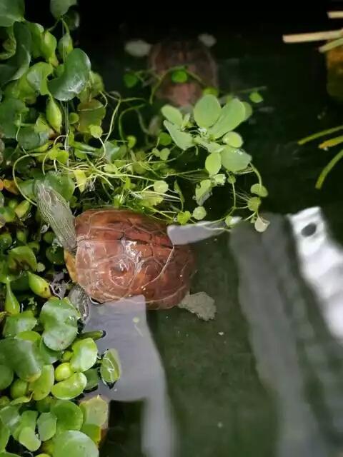 養龜到極致就會中以下幾種「毒」。你中了幾條? - 每日頭條