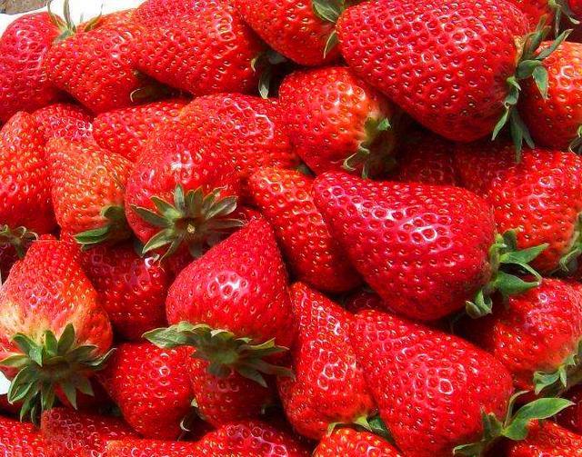 在農村。可種植草莓的品種有很多。但你知道哪種最好吃嗎? - 每日頭條
