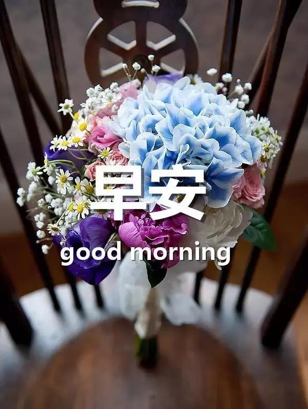 早安問候語配圖片 早安祝福語帶圖片 - 每日頭條