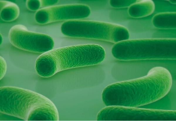 經常便秘腹瀉 原來是胃腸道益生菌不足導致! - 每日頭條