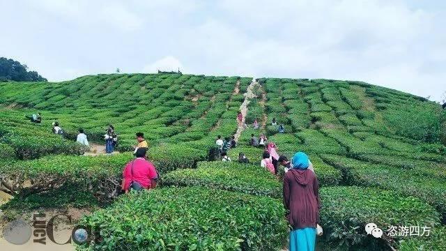夏至馬來西亞:綠色金馬侖 - 每日頭條