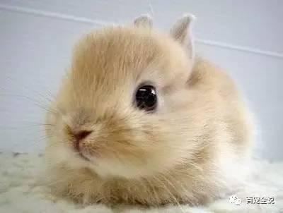 兔子不會親口告訴你的關於它的小秘密:年齡換算表 - 每日頭條