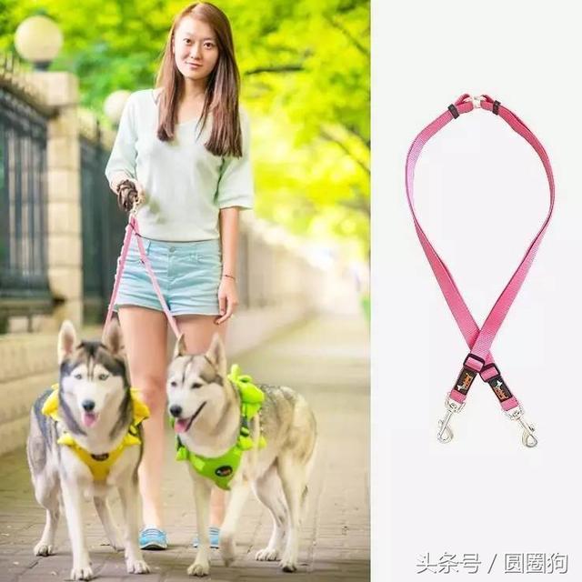 你知道狗狗的牽引繩有多少種嗎? - 每日頭條